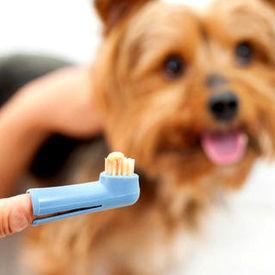 International Soft Bristled Finger Tooth Brush for Dogs, assorted
