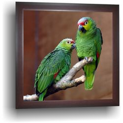 Parrot - Painting