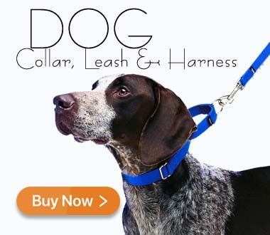 Dog Collar leash