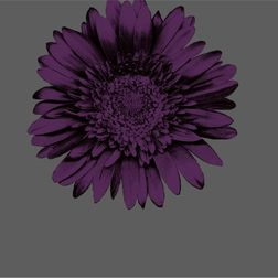 Elementto Wall papers Floral Design Home Wallpaper For Walls, purple 1, et31600 silver
