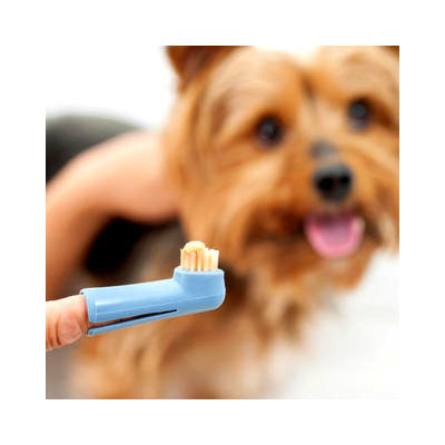 International Soft Bristled Finger Tooth Brush for Dogs, assorted