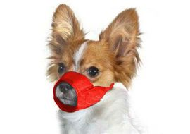 Kennel Nylon Adjustable Muzzle for Dogs, small, red