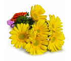 Giftacrossindia Bouquet of Yellow Gerberas (GAIMPHD0578)