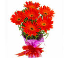 Giftacrossindia Bouquet of Red Gerberas (GAIMPHD0577)