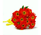 Giftacrossindia Gorgeous Ten Gerberas Bunch (GAIMPHD0043)