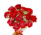 Giftacrossindia Romantic Fifteen Red Carnations Bouquet (GAIMPHD0060)