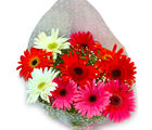 Giftacrossindia Fresh Mix Gerberas Bouquet (GAIMPHD0527)