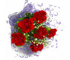 Giftacrossindia Six Red Carnations Bunch (GAIMPHD0581)
