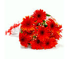 Giftacrossindia Bunch of Ten Red Gerberas (GAIMPHD0045)