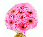Giftacrossindia Bunch of Ten Pink Gerberas (GAIMPHD0046)