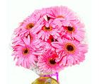 Giftacrossindia Soft Pink Gerberas Bouquet (GAIMPHD0549)