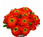 Giftacrossindia Bright Orange Gerberas Bouquet (GAIMPHD0546)