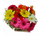 Giftacrossindia Ten Mix Colour Gerberas Bouquet (GAIMPHD0545)