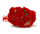 Giftacrossindia Resplendent Fifteen Red Carnation Bunch (GAIMPHD0011)