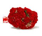 Giftacrossindia Resplendent Fifteen Red Carnation Bunch (GAIMPHD0011)