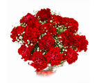 Giftacrossindia Bouquet of Fifteen Red Carnations (GAIMPHD0529)