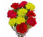 Giftacrossindia Bouquet of Ten Fresh Carnations (GAIMPHD0559)