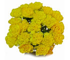 Giftacrossindia Pleasant Yellow Carnation Bouquet (GAIMPHD0526)