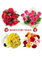BAF Missing You 7 Days 100 Roses Gift, Fixed Time ...