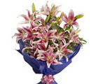 BAF Pink Stargazer Lilies Gift, free shipping
