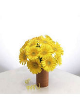 BAF Crazy Daisy Gift, Free Shipping