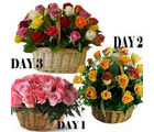 BAF 3 Days Fresh Colors of love Gift, free shipping