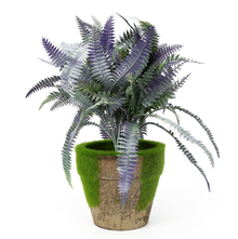Fern Potted Plant - @home by Nilkamal, Green
