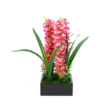 Pink Dragon Potted Plant - @home by Nilkamal, Black