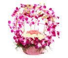 Ferns N Petals Vibrant Orchid Celebration