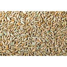 Rye Grain 1Kg