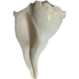 DAKSHINAVARTI SACRED SHANKH(WHITE)